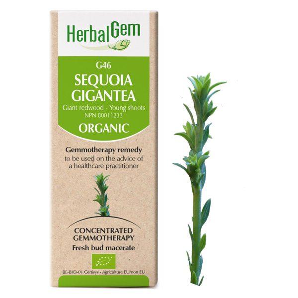 g46 giant redwood boyds alternative health