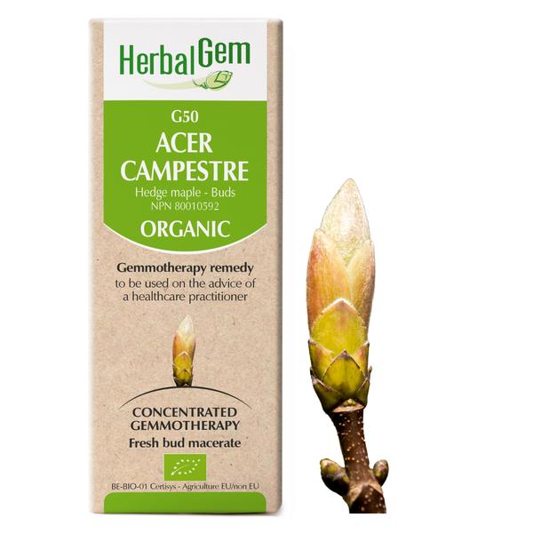 g50 hedge maple boyds alternative health