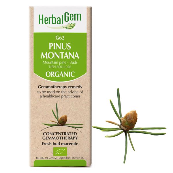 g62 mountain pine boyds alternative health