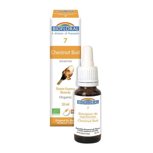 chestnut bud 7 boyds alternative health