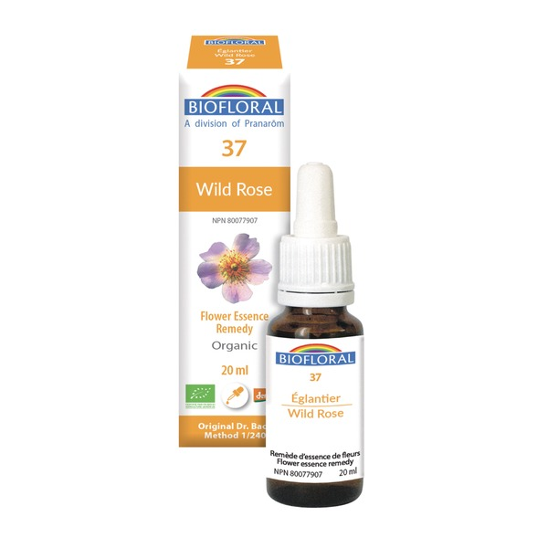 wild rose 37 boyds alternative health